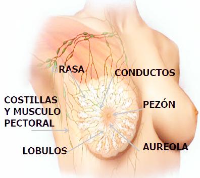 Plasticlínica | Mamaplastía de aumento